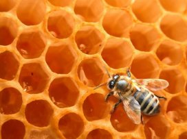 L'abeille ouvrière du miel