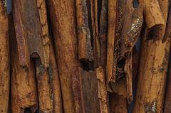 Cinnamomum par José Pestana